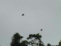 09_Burung_tahun
