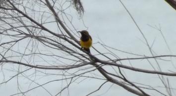 21_Sunbird