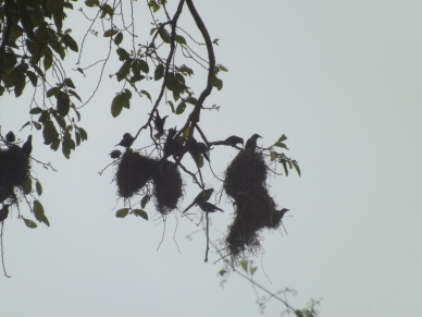 24_Nests