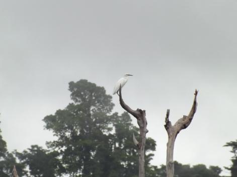 25_Egret