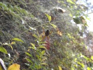 Arachnid_3b
