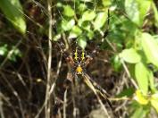 Arachnid_Stabell_2b