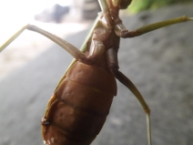 Insect_Mantis_2b