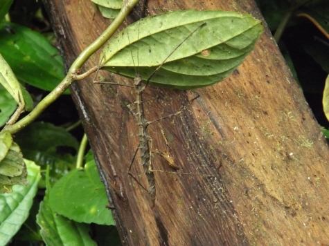 Insect_stick_1a