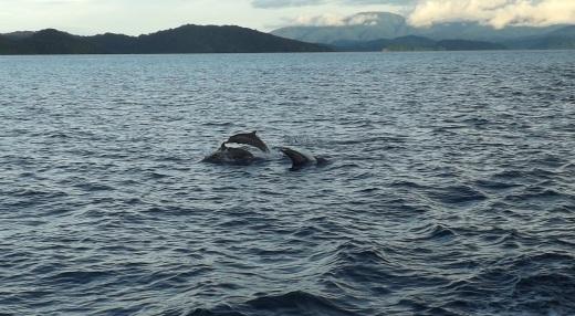 Marine_dolphins
