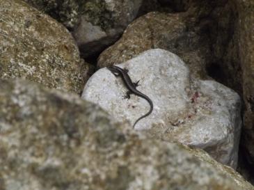 Reptile_1a