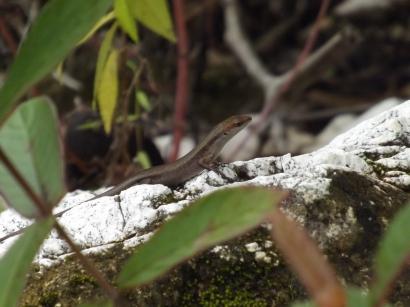 Reptile_2a