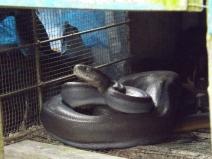 Snake_Boelen_2b