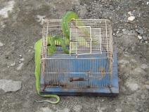 Snake_Yapen_boa_2d